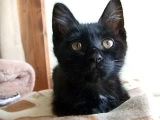 チビッコ黒猫くん